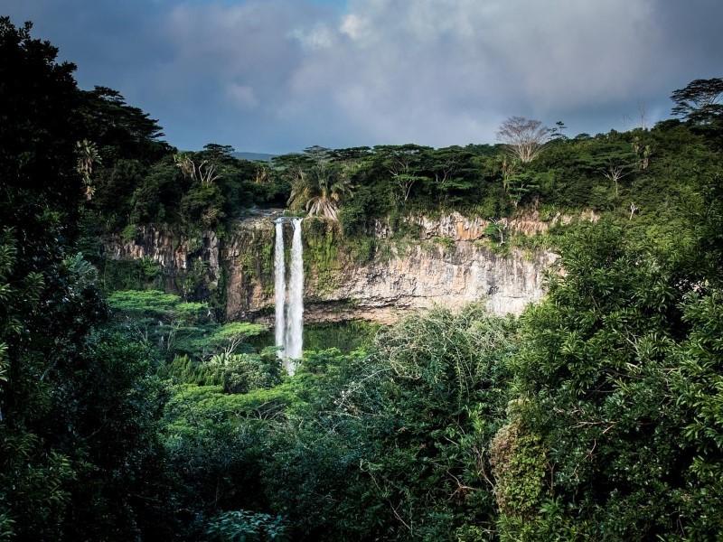 Rettung des Regenwaldes